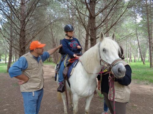 equitation2.jpg